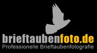 Taubenfotografie